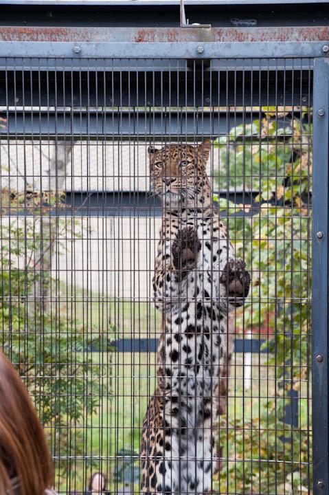 旭山動物園の写真